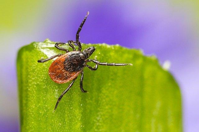 Maladie de Lyme et Naturopathie